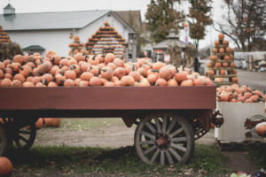 things to do in fall in dearborn michigan